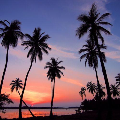 paysage des tropiques
